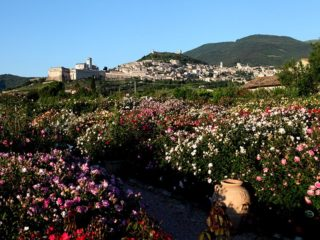 Spello e Assisi - Umbria in bloom