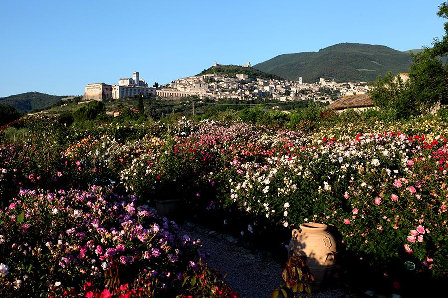 Umbria dei fiori tra spello e assisi itinerario green - Il giardino dei ciliegi assisi ...
