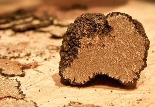 tartufo di Norcia - truffle hunt in Norcia