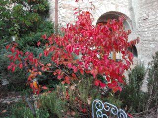 le foglie sono così rosse