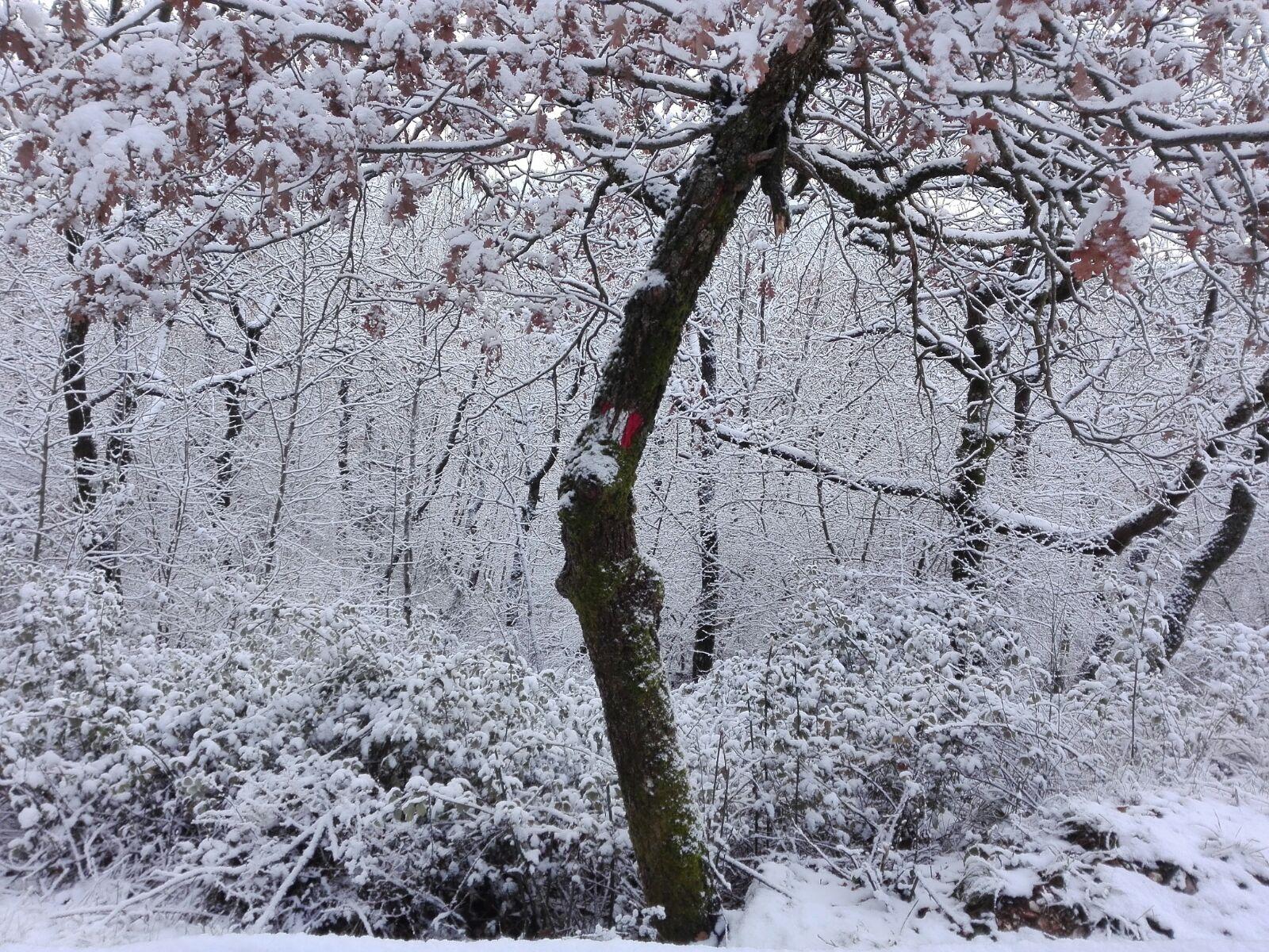 SUBASIO WITH THE SNOW